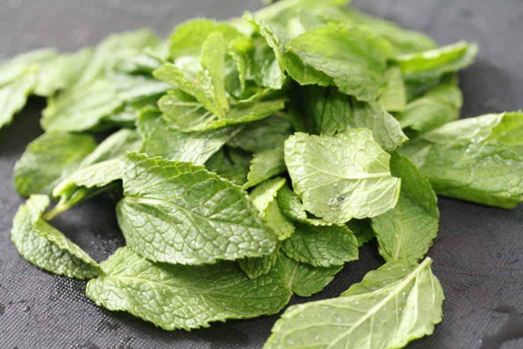 Freshly picked mint leaves