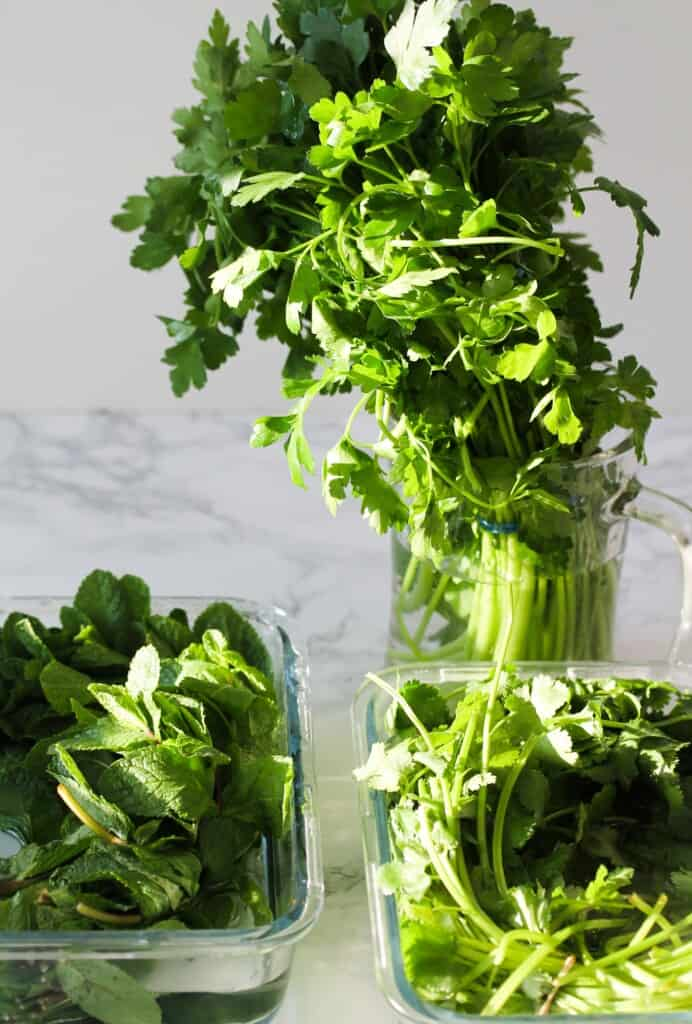coriander/cilantro, parsley and mint herbs in water